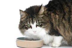 Cat Eating Lizenzfreie Stockbilder