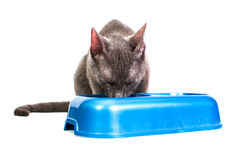 Cat eating stock image