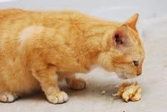 Cat Eating Stock Photo