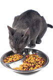 Cat eating Royalty Free Stock Images