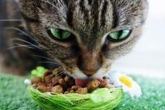 Cat Eating royalty-vrije stock afbeeldingen