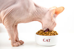 Cat Eating Photographie stock