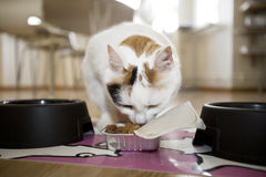 Cat eating Stock Images