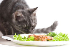 Cat eating chicken wings Royalty Free Stock Images
