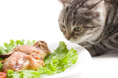 Cat eating chicken wings Royalty Free Stock Photos