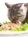 Cat eating chicken wings Royalty Free Stock Photography