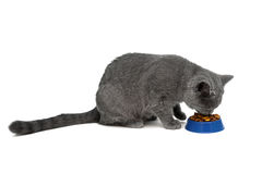 Cat eating dry food from a bowl on a white background Stock Photos