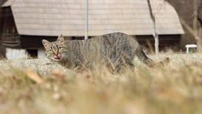 Cat Eating en la hierba almacen de metraje de vídeo