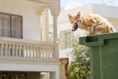 Cat eating fish from a garbage can Stock Photography