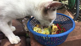 Cat eating fish on the ground stock video footage