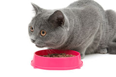 Cat eating food from a bowl on a white background close-up Royalty Free Stock Photos