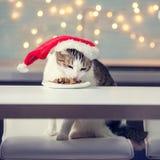 Cat eating food stock image