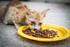 A cat eating food Royalty Free Stock Photos