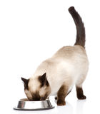 Cat eating food. isolated on white background Stock Photos