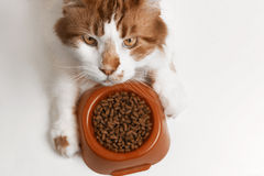 Cat eating food Stock Photo