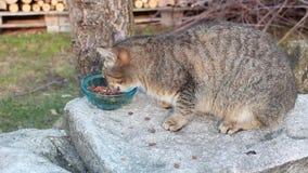 Cat eating food Stock Photos