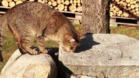 Cat eating food Royalty Free Stock Photos