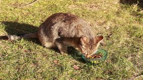 Cat eating food Royalty Free Stock Photo