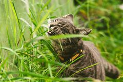 The cat is eating grass in the park. stock photos