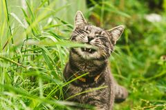 The cat is eating grass in the park. royalty free stock images