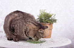 Cat eating from a green plate stock images