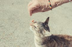 Cat eating from the hand of a woman royalty free stock photos