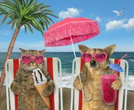 Dog with juice and cat with ice cream on loungers stock photo
