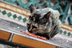 Cat Eating Kibble på gatan Royaltyfri Foto