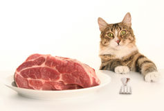Cat Eating Meat Royalty Free Stock Photos