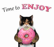 Cat eating a raspberry donut stock photo