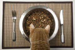 Cat eating from silver bowl Stock Photography
