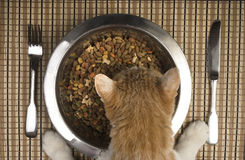 Cat eating from silver bowl. A very lucky and pampered cat is eating from her bowl. Dry cat food in a metal cat bowl and silverware on a place mat Royalty Free Stock Photography