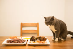 Cat eating at the table royalty free stock photo