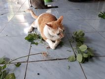 The cat is eating the tree roots, lying on the floor. stock images