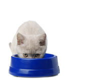 The cat eats from a bowl Stock Photography