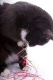 Cat eats Christmas confetti Stock Photography