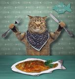 Cat eats a dish of fish Royalty Free Stock Images