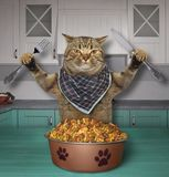 Cat eats dry feed in the kitchen. The hungry cat with a knife and a fork eats dry feed in the kitchen royalty free stock photo