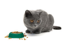 Cat eats dry food from the green bowl on a white background Stock Images