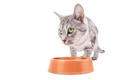 Cat eats feed bowl clipping path Stock Photo
