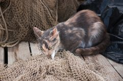 Cat eats the fish on the fishing net. Royalty Free Stock Photography