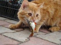 Cat eats the fish Stock Image