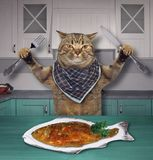 Cat eats fish in the kitchen stock images