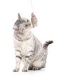 Cat eats fish. Stock Images