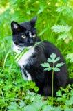 Cat eats grass Royalty Free Stock Photo