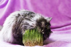 Cat eats grass Stock Photography