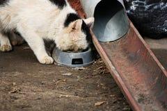 The cat eats. Stock Photo
