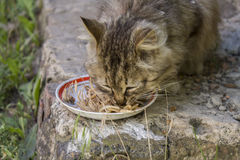 Cat eats pasta Royalty Free Stock Images