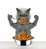 Cat eats with a spoon from a bowl. Isolated on white background stock images