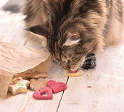 Cat eats on the table Stock Photos